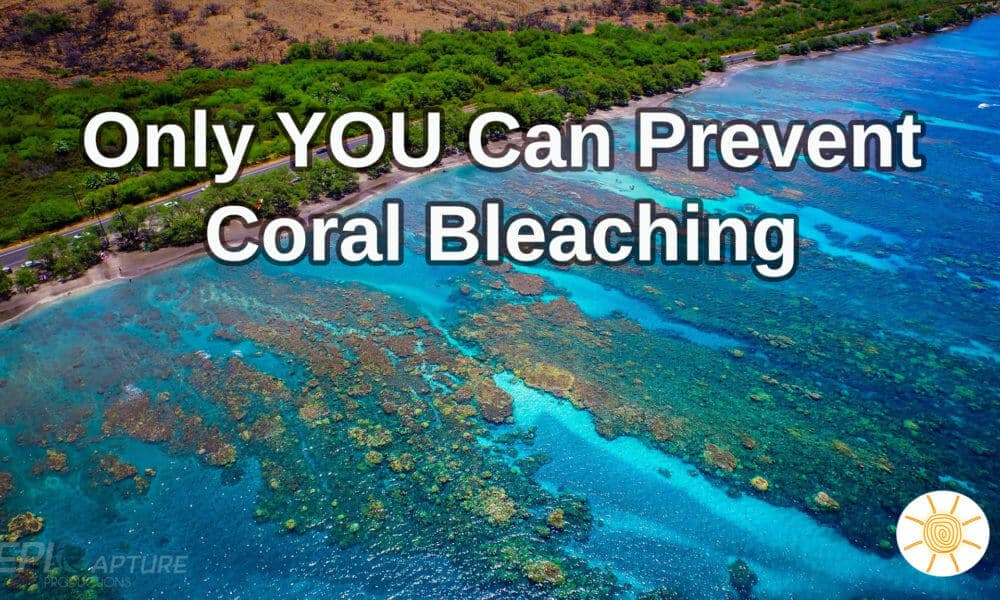 How To Help Prevent Coral Bleaching